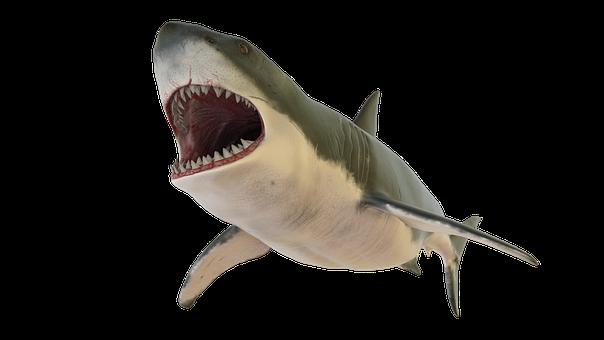 大きなサメ