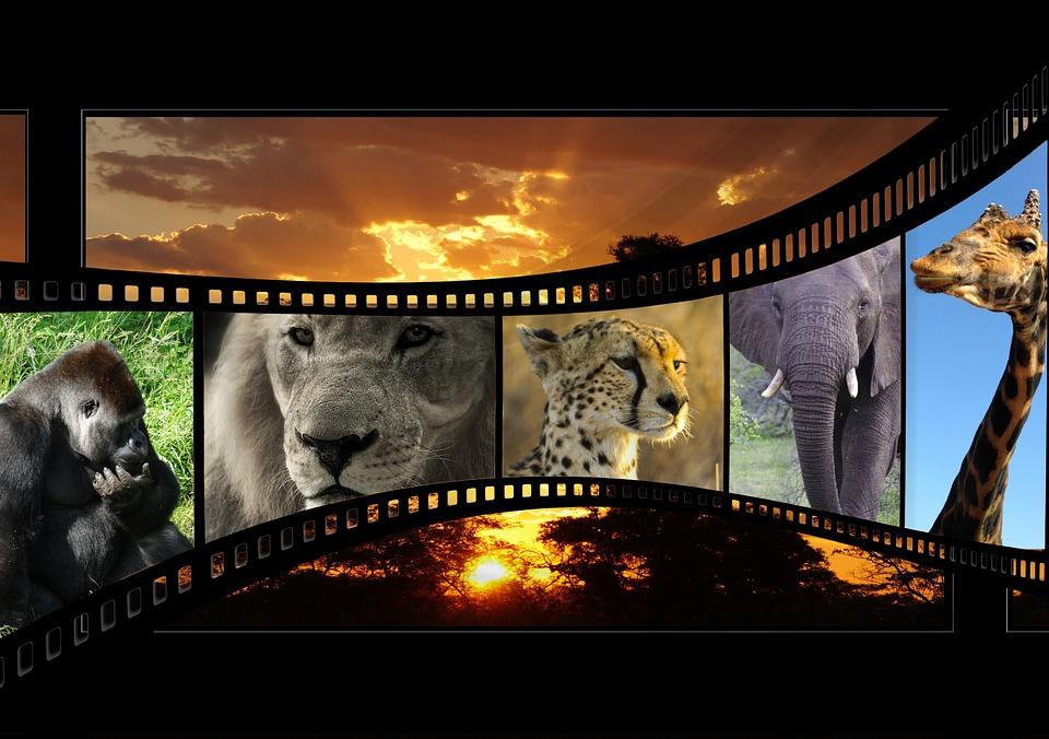 色々な動物と映画フィルム