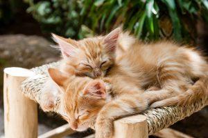 ぴったり重なって寝ている猫たち